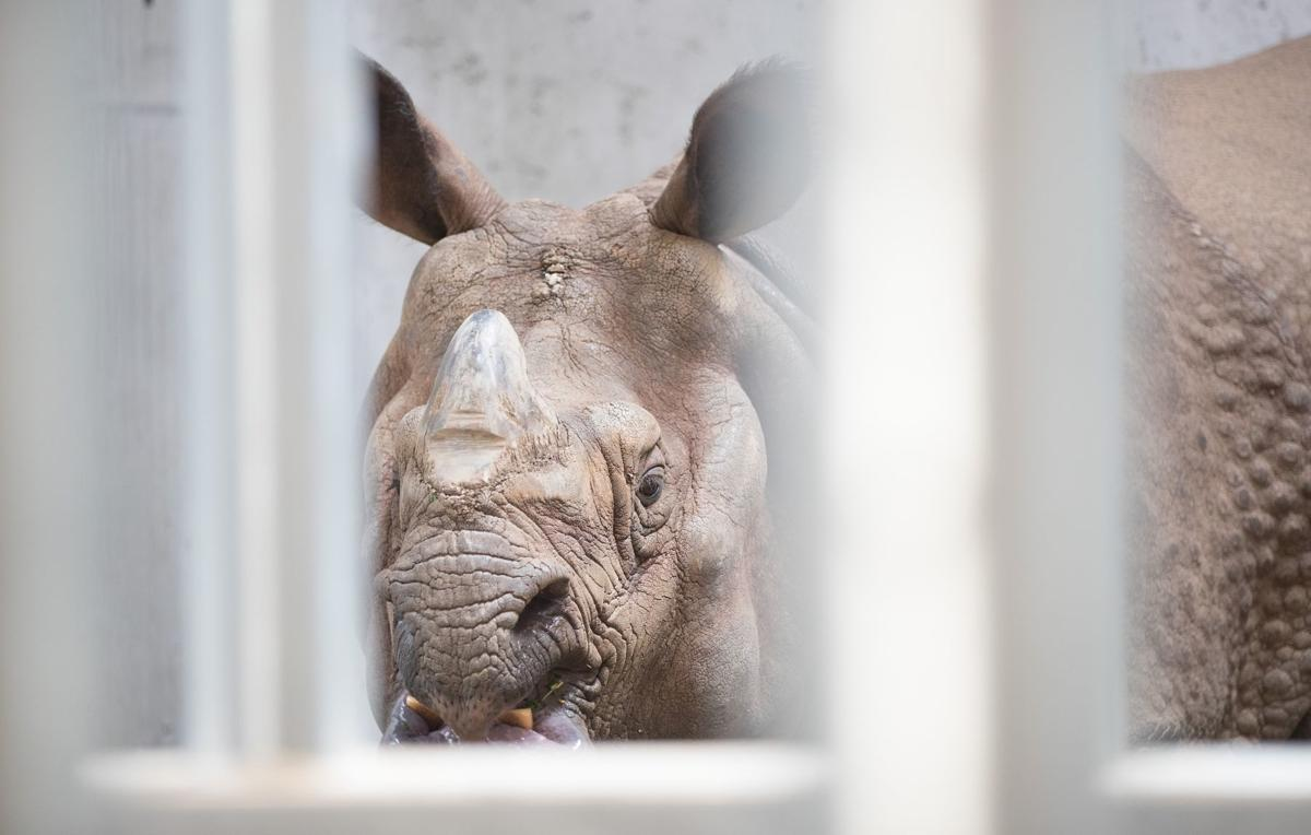 20180510_liv_indianrhinos_photo02