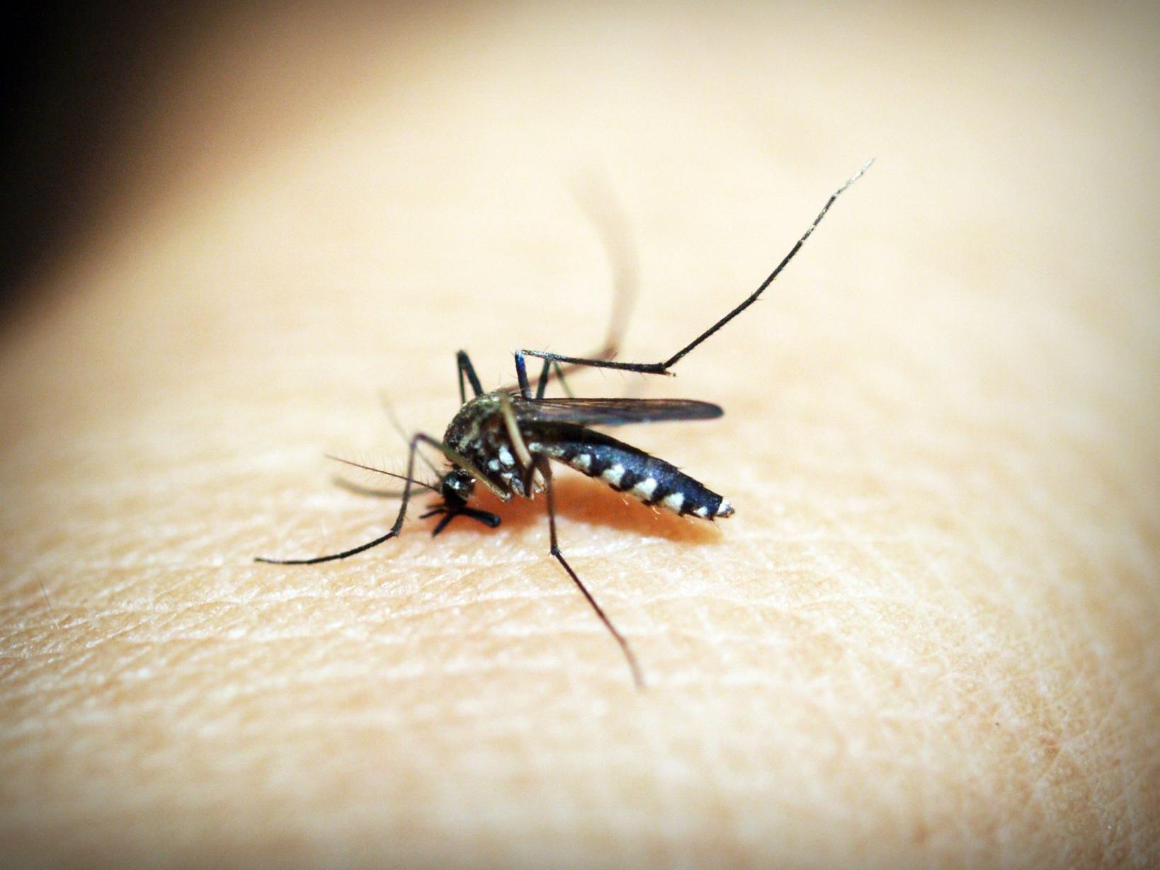West Nile virus on the rise in eastern Nebraska, health officials say