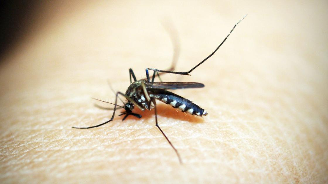 West Nile virus on the rise in eastern Nebraska, health officials say