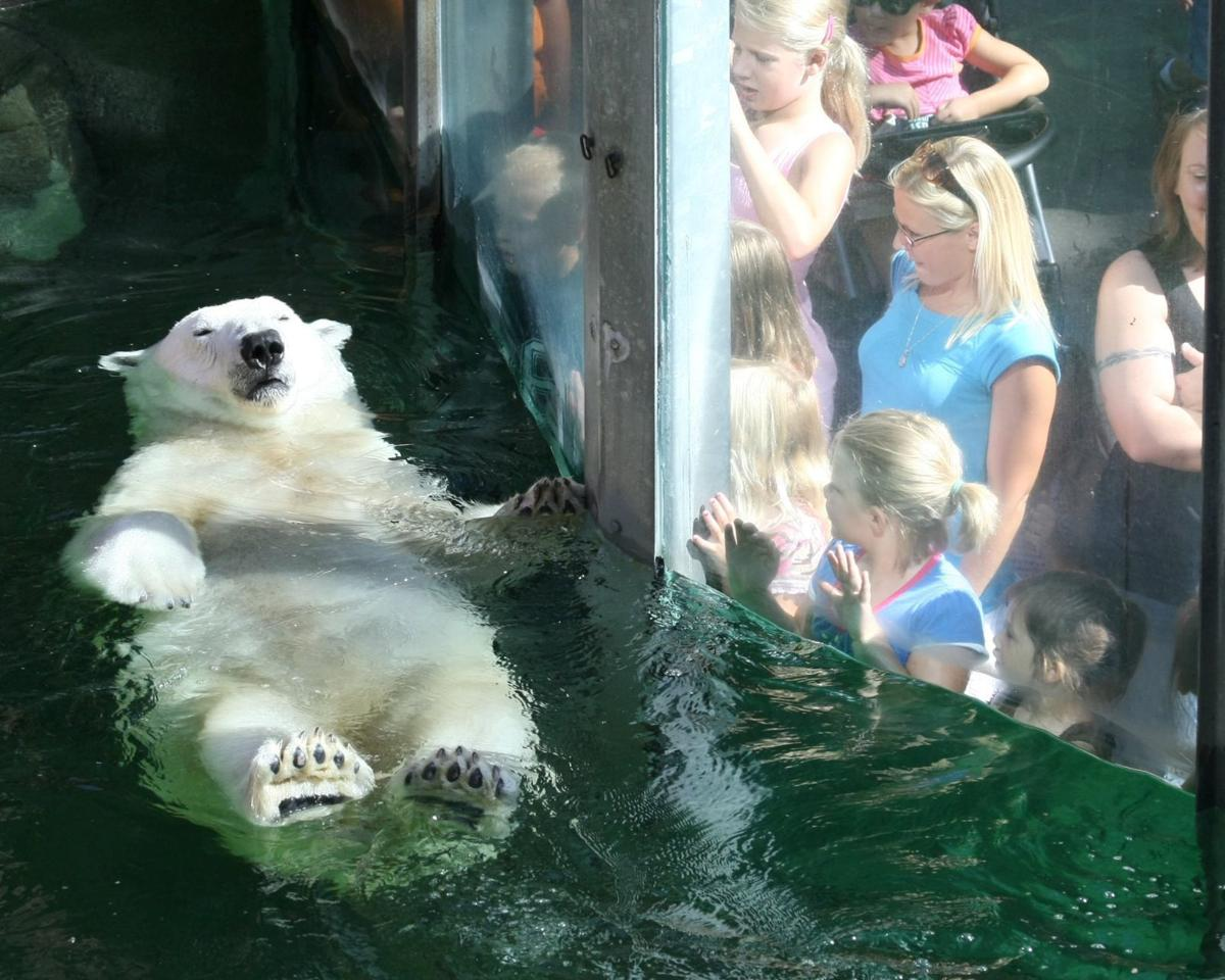 The Omaha Zoo S Lone Polar Bear Is Moving To Kansas City Freeing