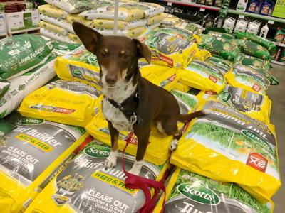 Dog Gone Problems: How to keep your dog safe around weed killer and