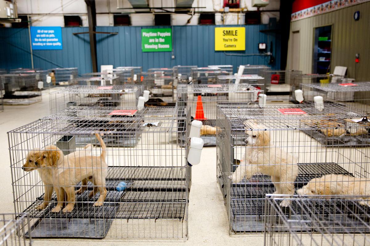 Dog Kennel Business