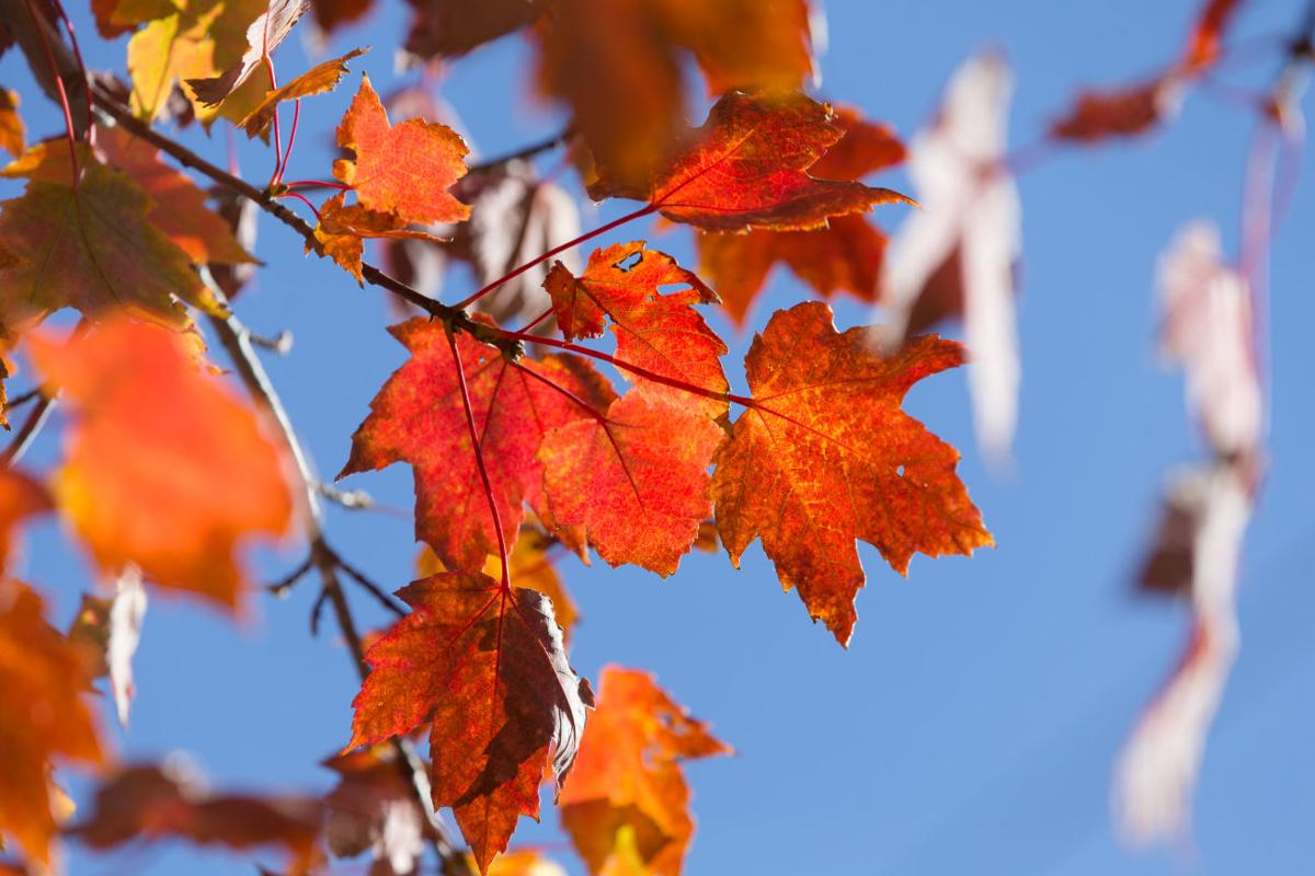Fall Colors In Omaha Should Burst Forth Over The Next Week Weather
