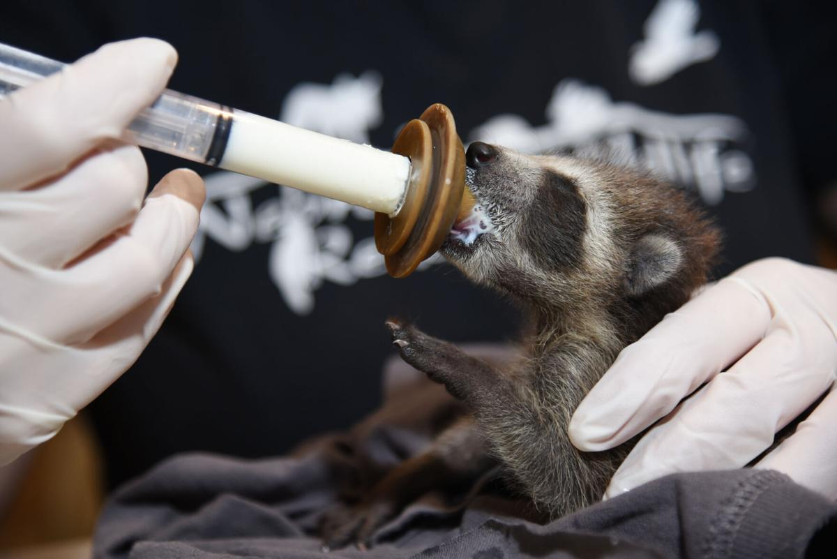 041221-owh-new-wildliferehab-p1