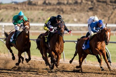 Check out horse races (copy)