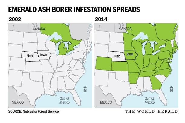 Emerald Ash Borer Infestation Map Omahacom - Emerald ash borer map