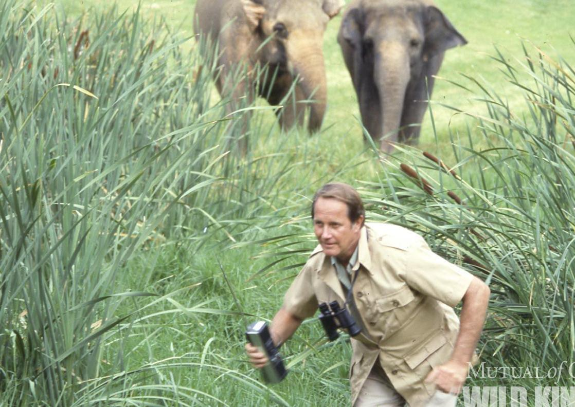 Fowler chased by elephants
