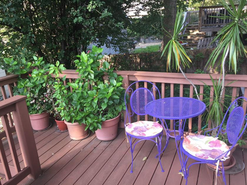 Don't wait: Why you should wash your plants and give them some shade before the first frost