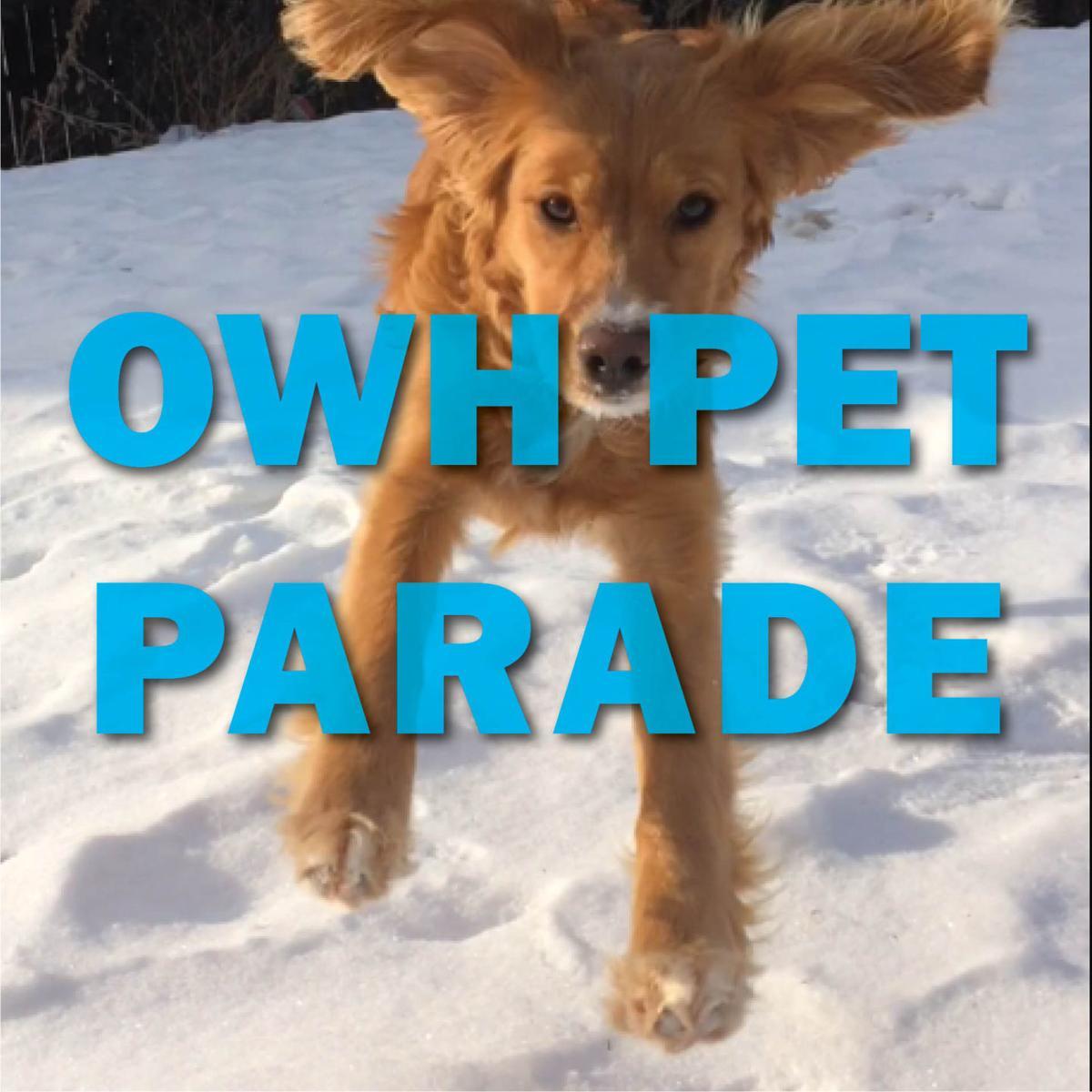 Follow Pet Parade on Twitter
