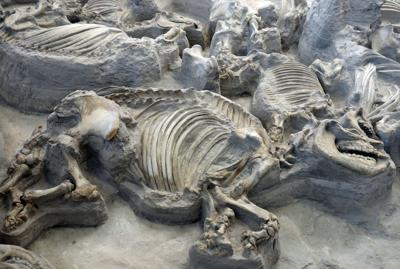 Check out the fossils of hundreds of animals