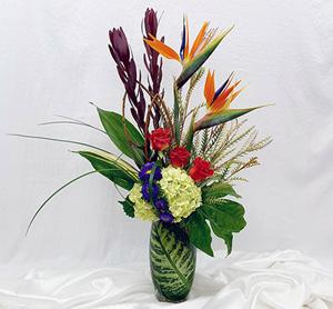 Corum's Flowers & Gifts | Greenhouse | Delivery| Council Bluffs | Omaha | Bird-of-Paradise
