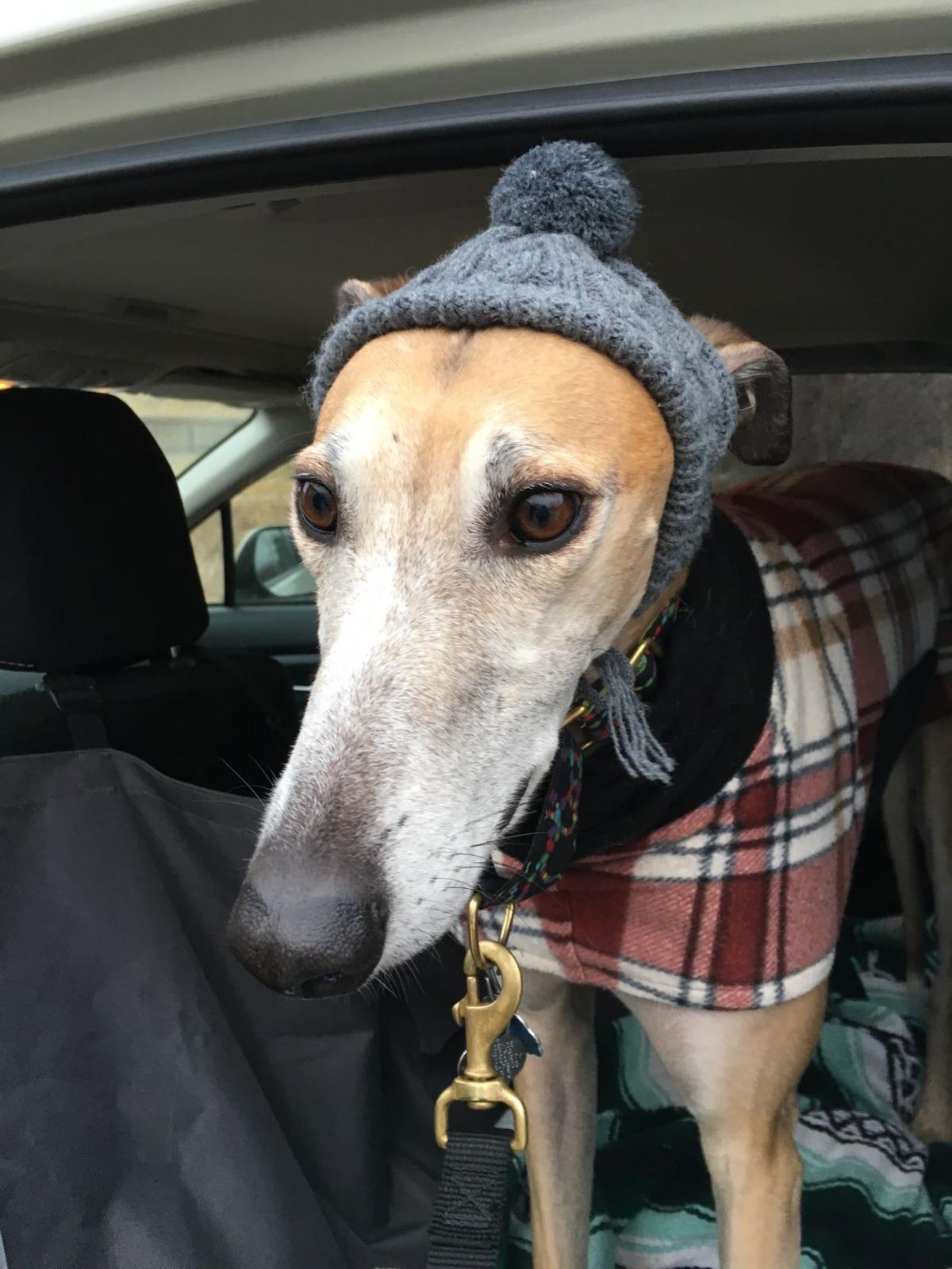 Greyhound Omaha To Kansas City