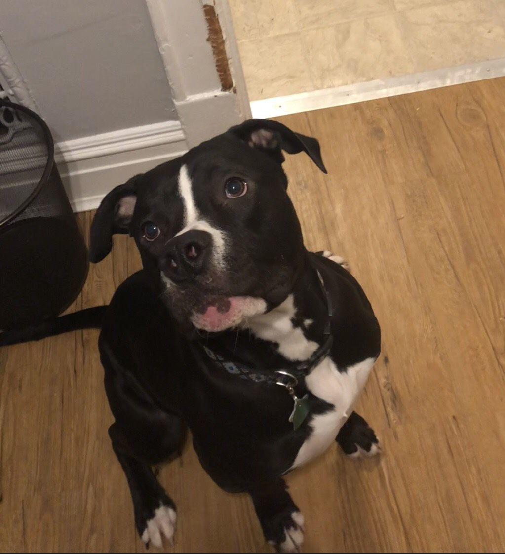 Dog for April 3