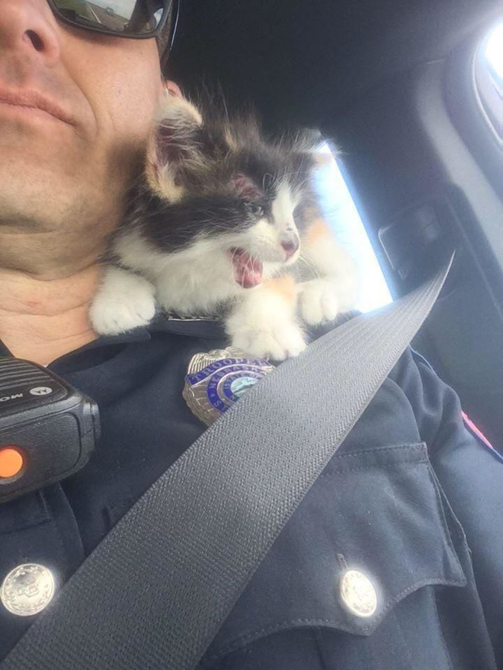 A Nebraska trooper helped rescue a kitten