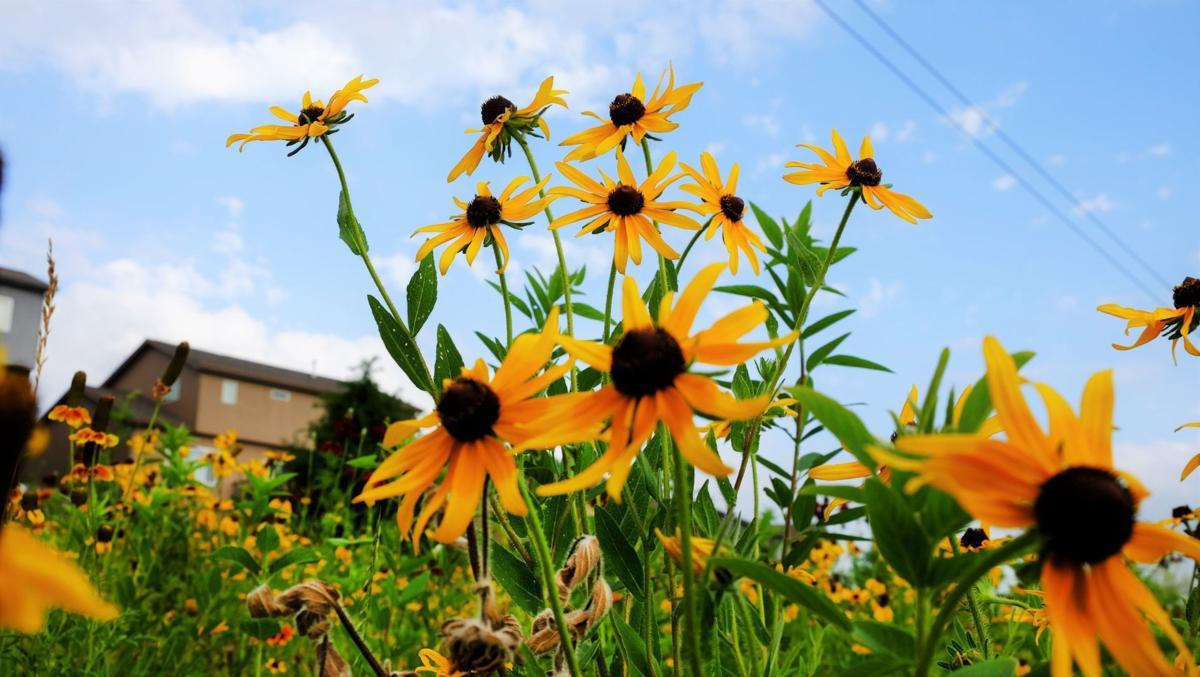 wildflower field(8)