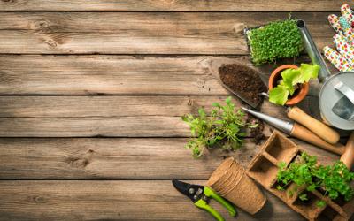 Top 10 Garden Tools for Tough Gardening Problems