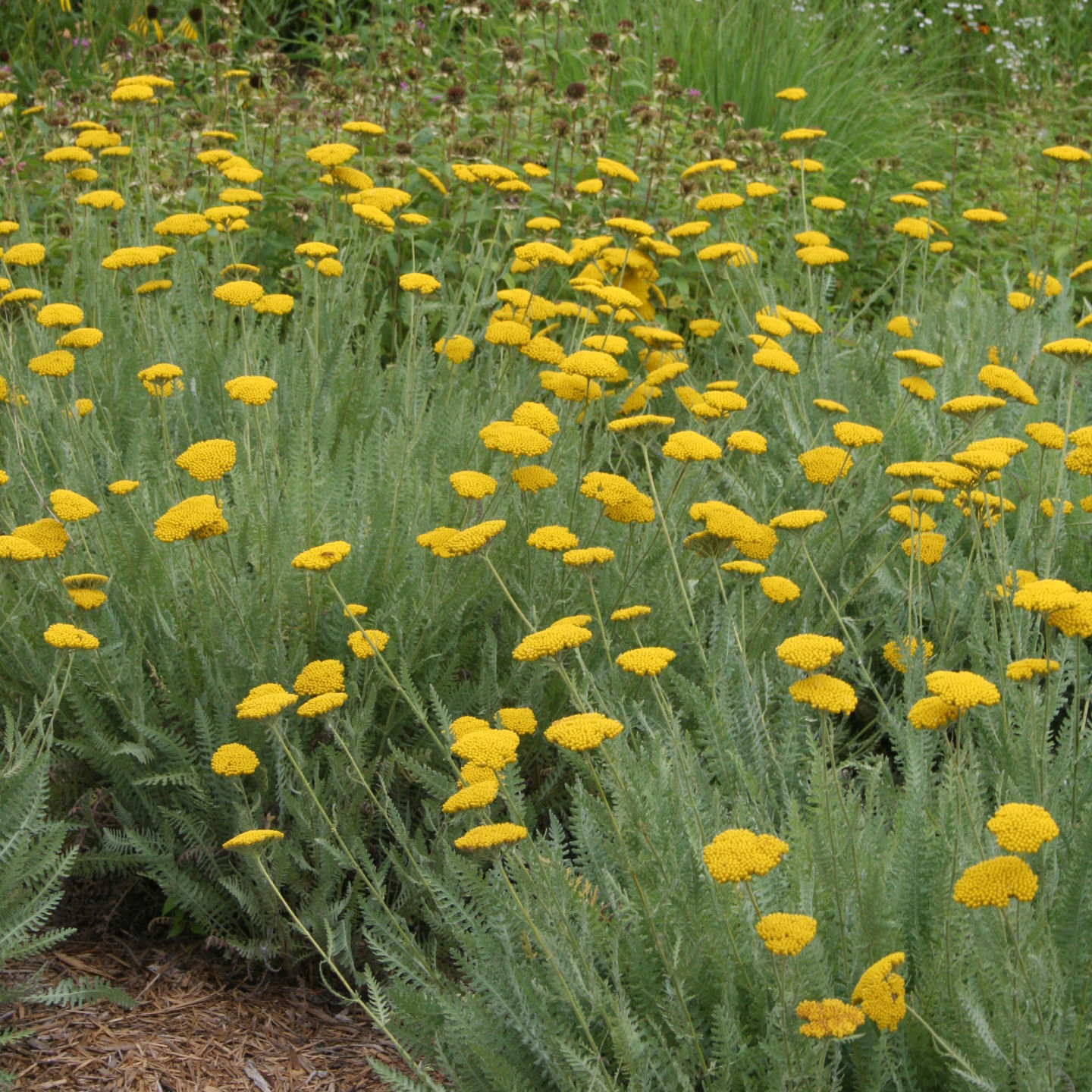 Native Plant Communities of the Great Plains Natures Heartland