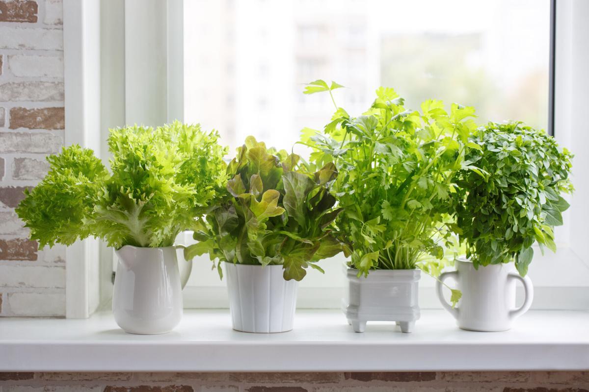 Kitchen garden of herbs.