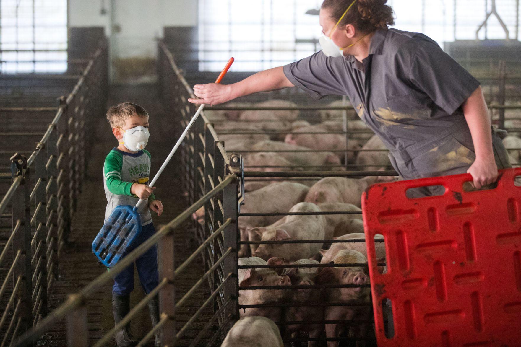 "METAL SIGN CATTLE  FARM FARMING COWS AGRICULTURE ANIMALS 466 11/"" X 6/"" DANGER"