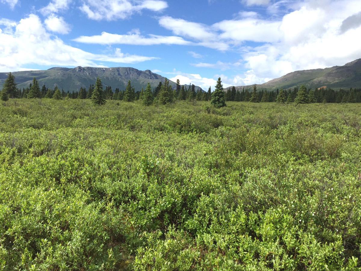 Destination_Alaska_Day 2_DenaliNationalPark_KevinWarneke .JPG