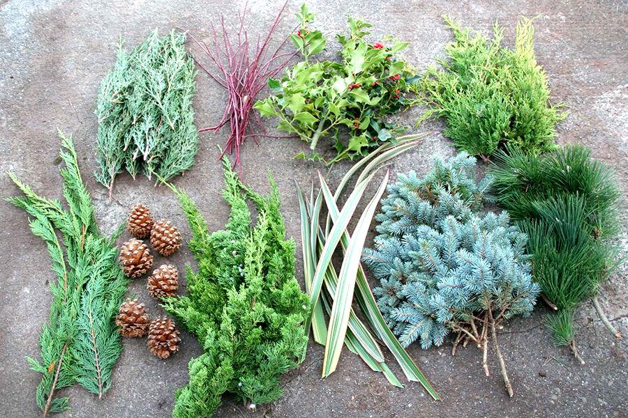 Christmas decorating plants