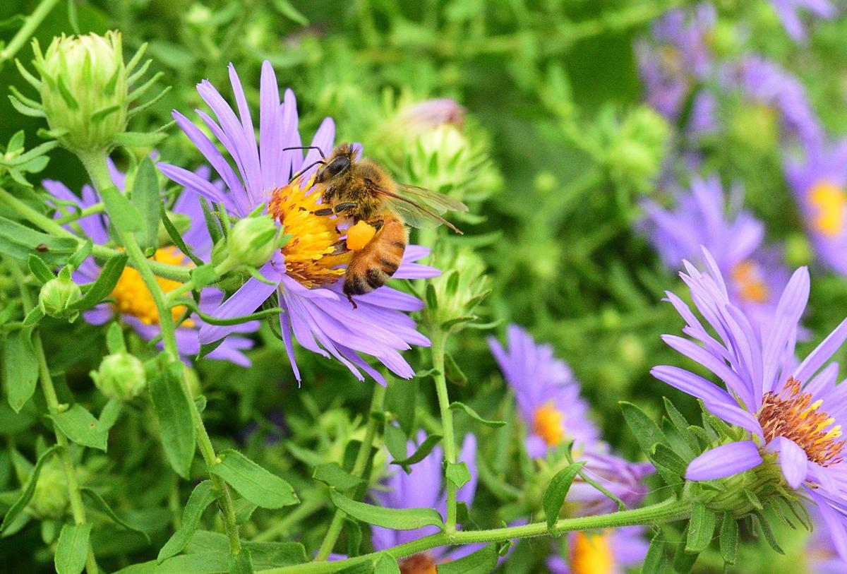 Honey bees_00001_03