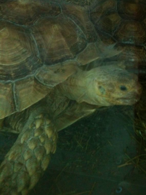 Pet store's move allows tortoises some room to roam