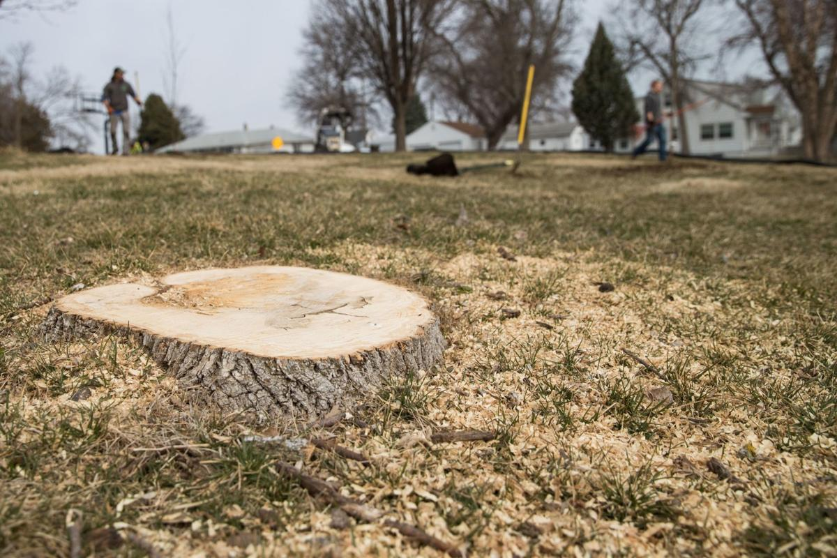 Omaha nonprofit hopes to plant thousands of trees to limit emerald ...