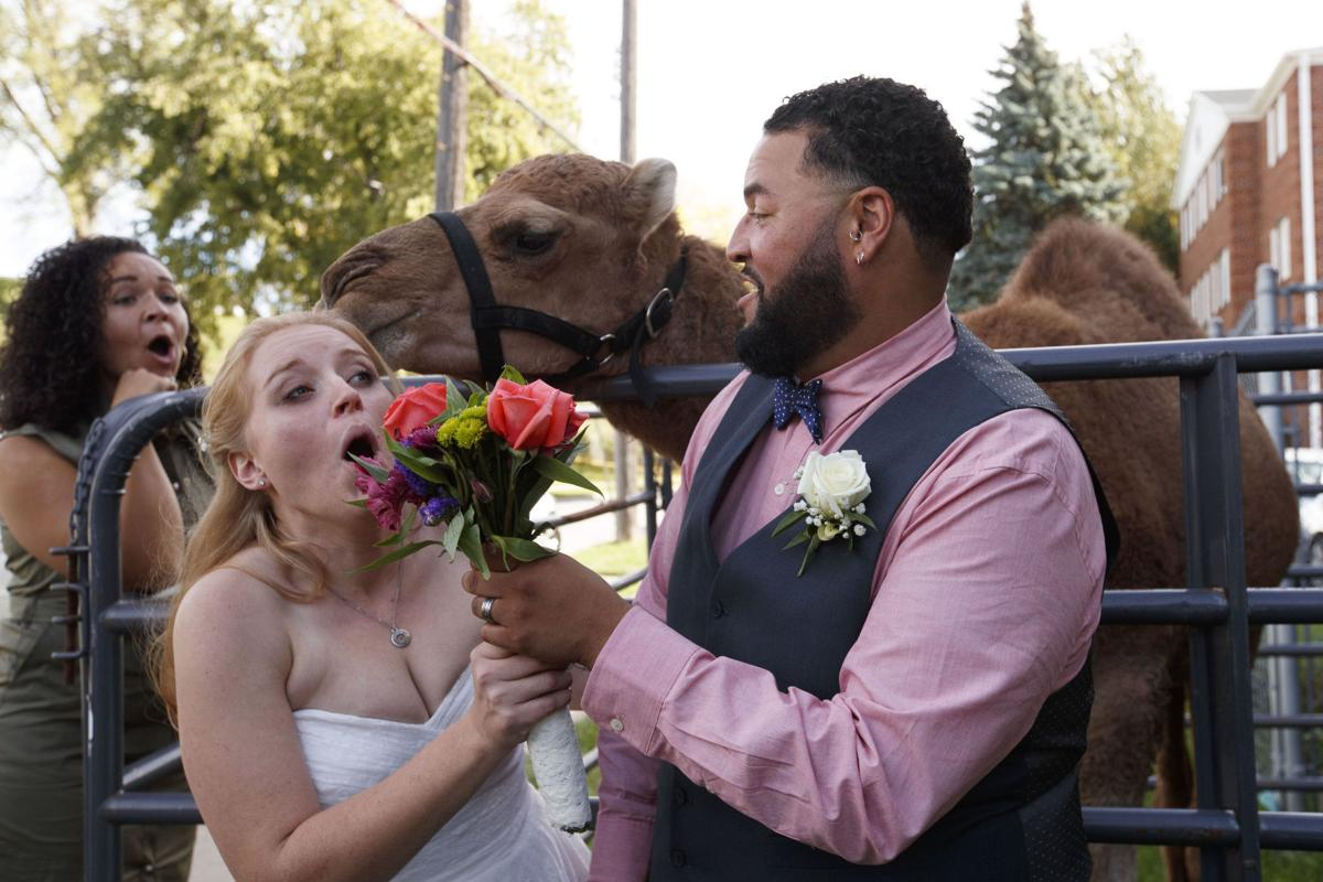 It's hump day': Camel, mini-donkeys surprise Omaha bride on her big