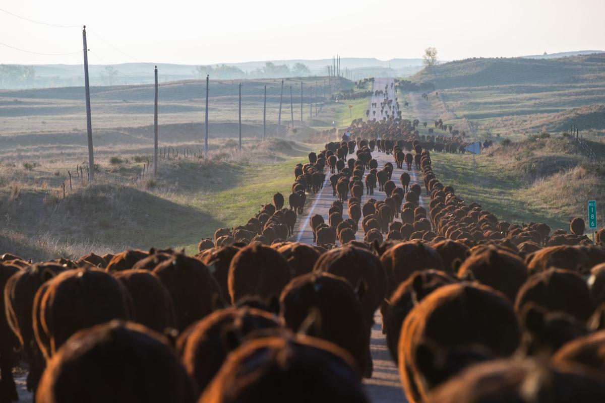 1 - Beef (copy)