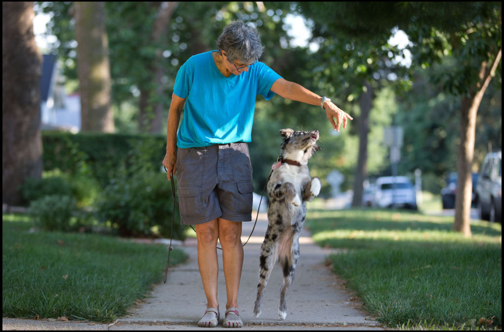 Week in Pictures: Dog days of summer, Omaha Fashion Week