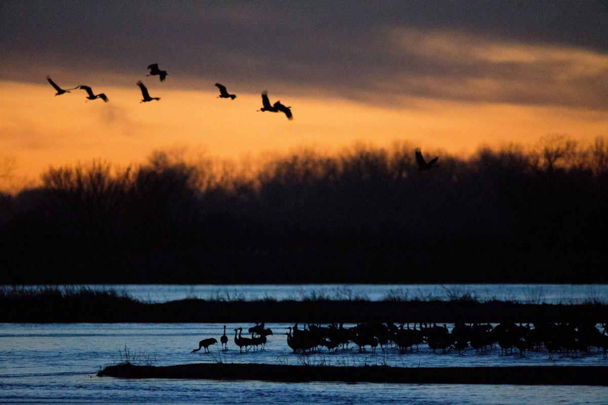 A Night With The Sandhill Cranes At The Crane Trust In >> You Ll Need To Be An Early Bird To Catch The Sandhill Crane