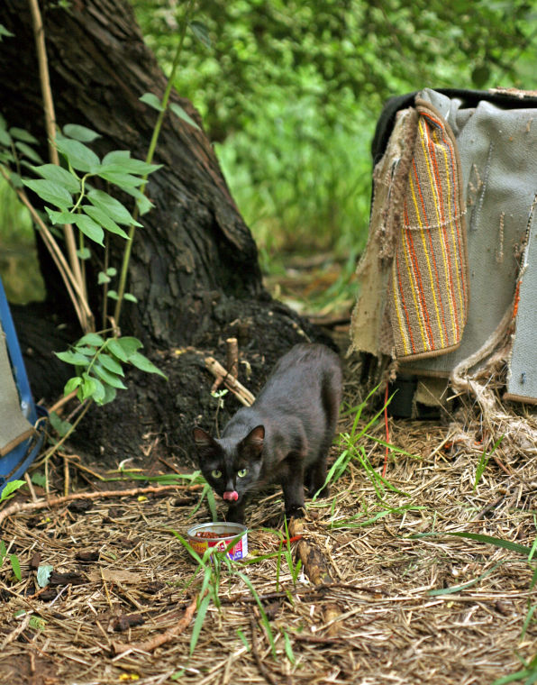 City's littering ordinance, feral cat rules causes grief with would-be caretakers