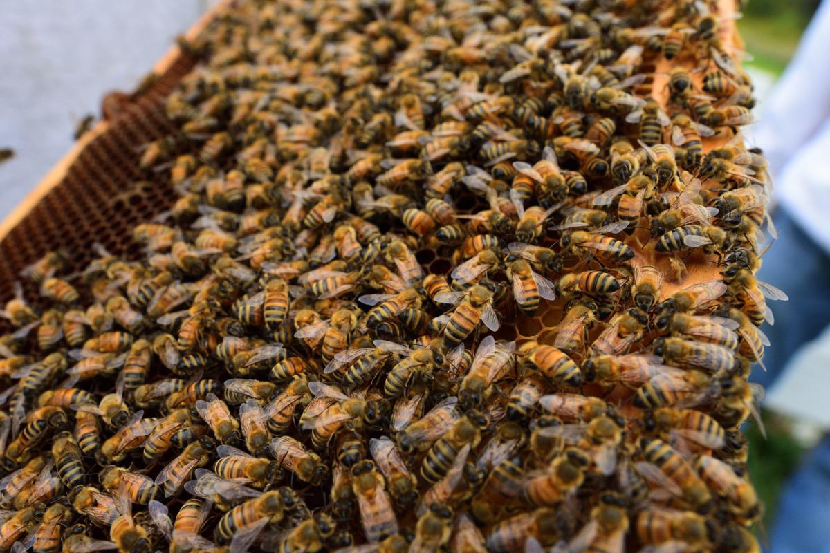 Honey bees_00001_06