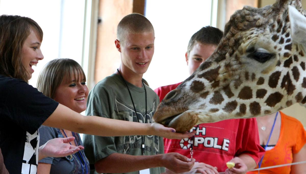 sam the giraffe1