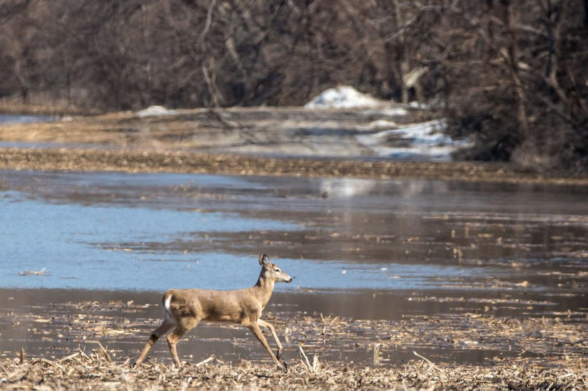 Trump Plan Would Mean More Hunting Opportunities At Desoto Boyer