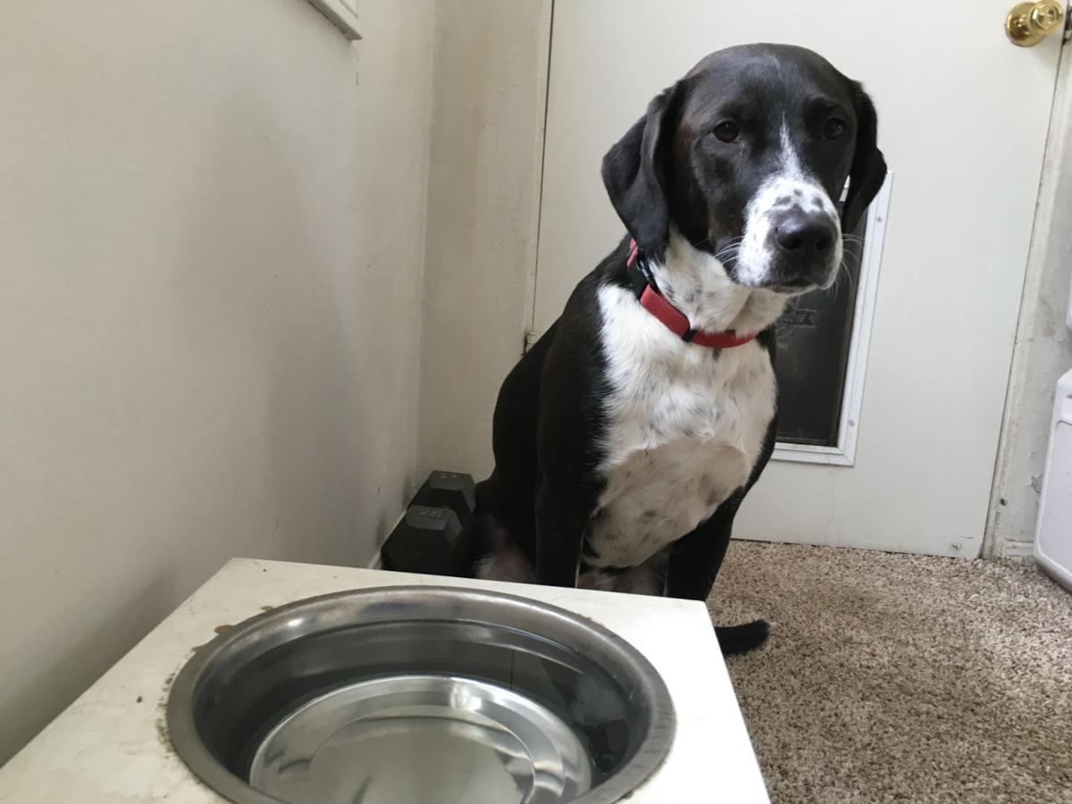 Dog with water bowl