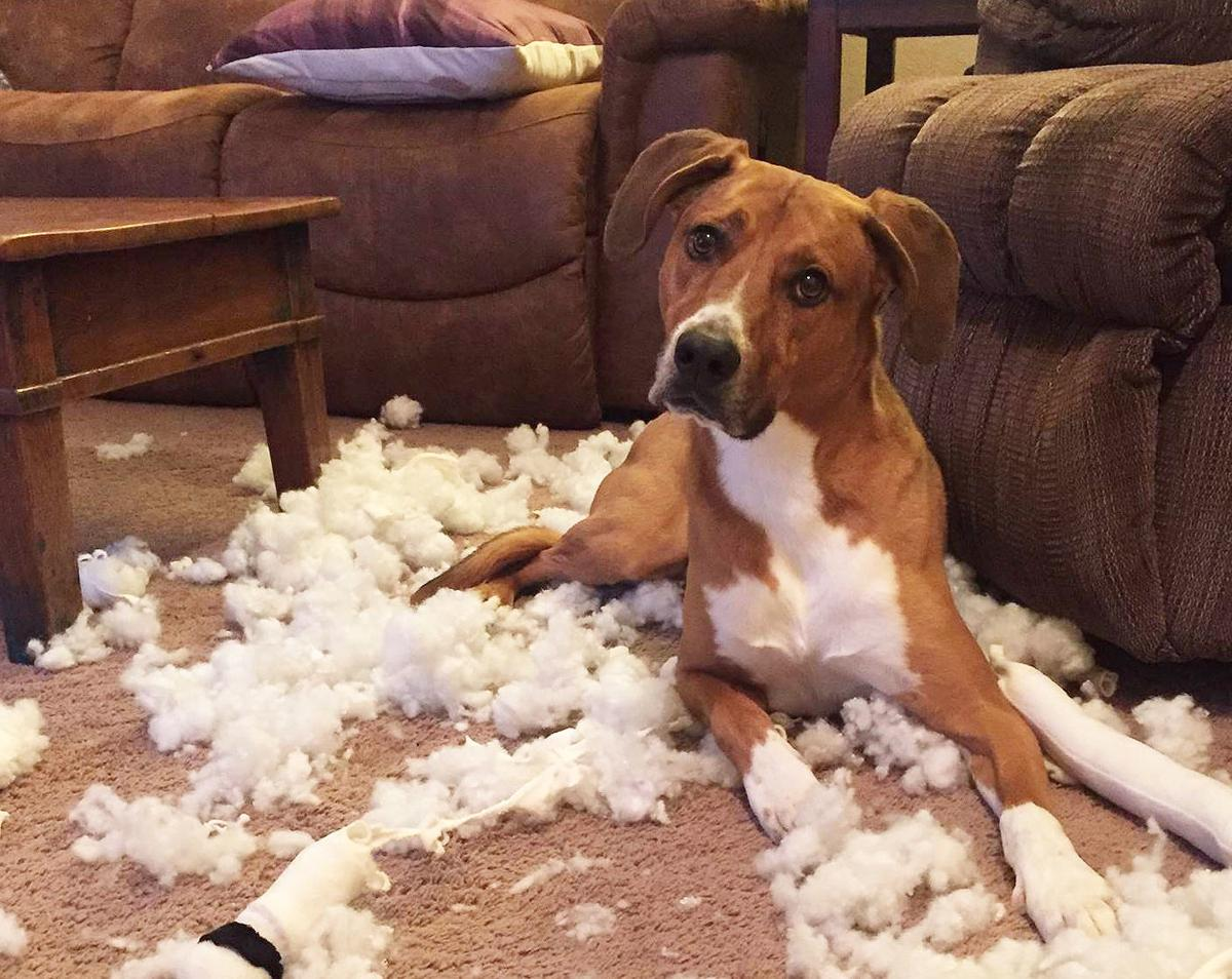 Dog Gone Problems: Our dog fears the kennel and has