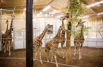 Before snow hit, zoo saw a spike in week's attendance
