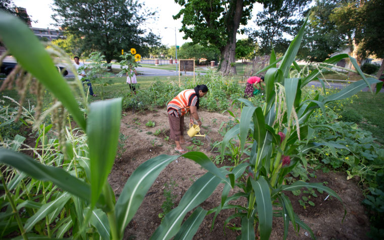 At community garden, Bhutanese refugees tend their cultural roots ...