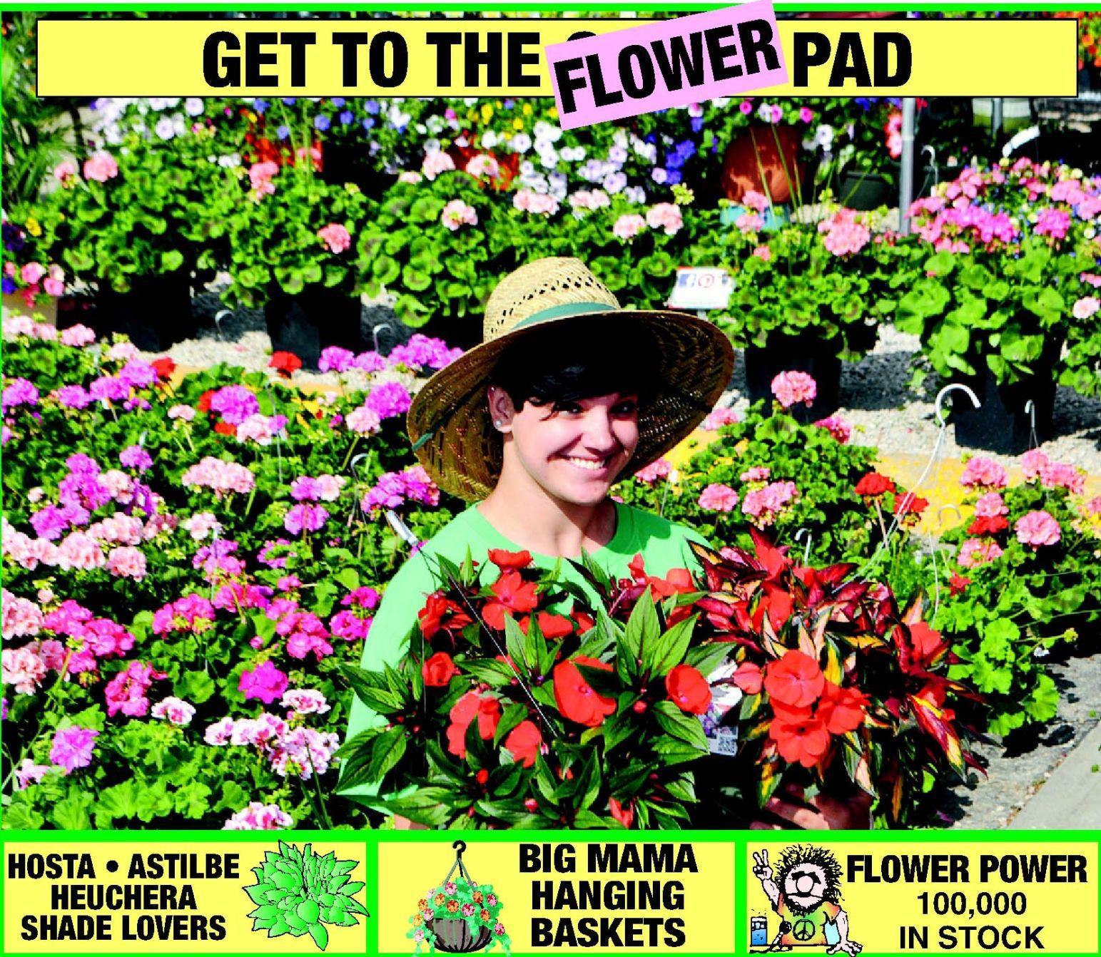 English Garden Hostas On The Cheap Articles Omaha Com