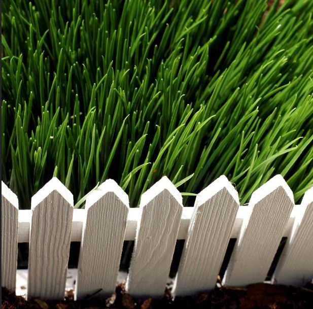 Throw a lifeline to your lawn