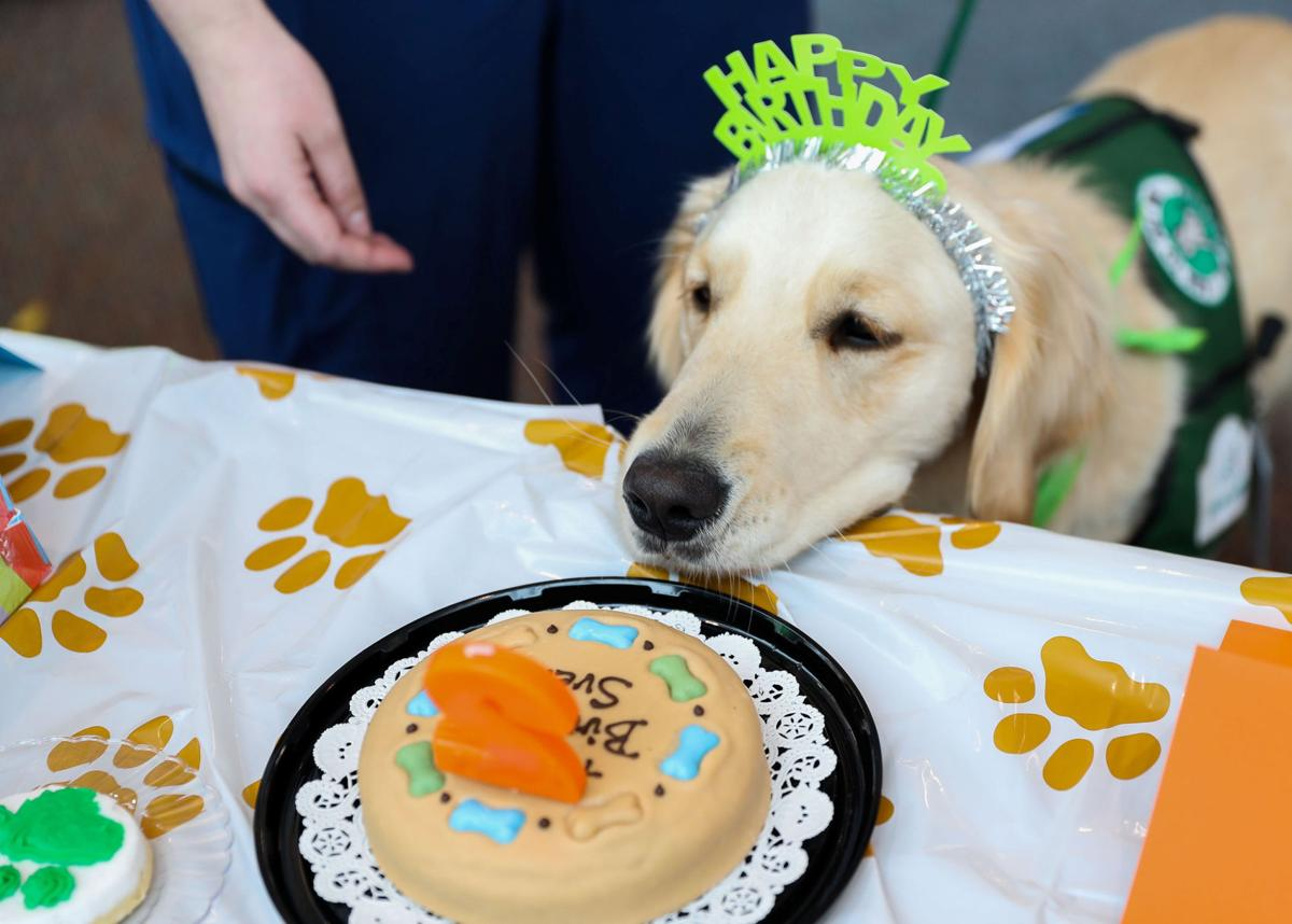 Photos Sven The Facility Dog Celebrates His Birthday At Childrens Hospital