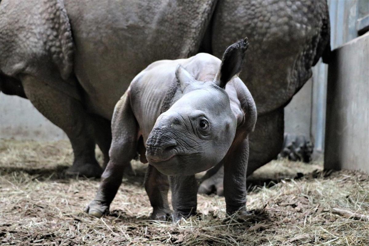 Baby rhino born in Omaha