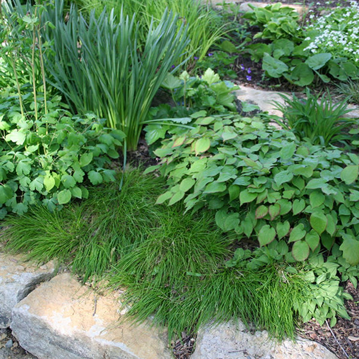 Beneficial Landscapes Living Mulch