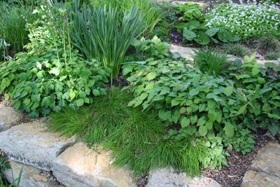 Beneficial Landscapes Living Mulch Says No To Weeds
