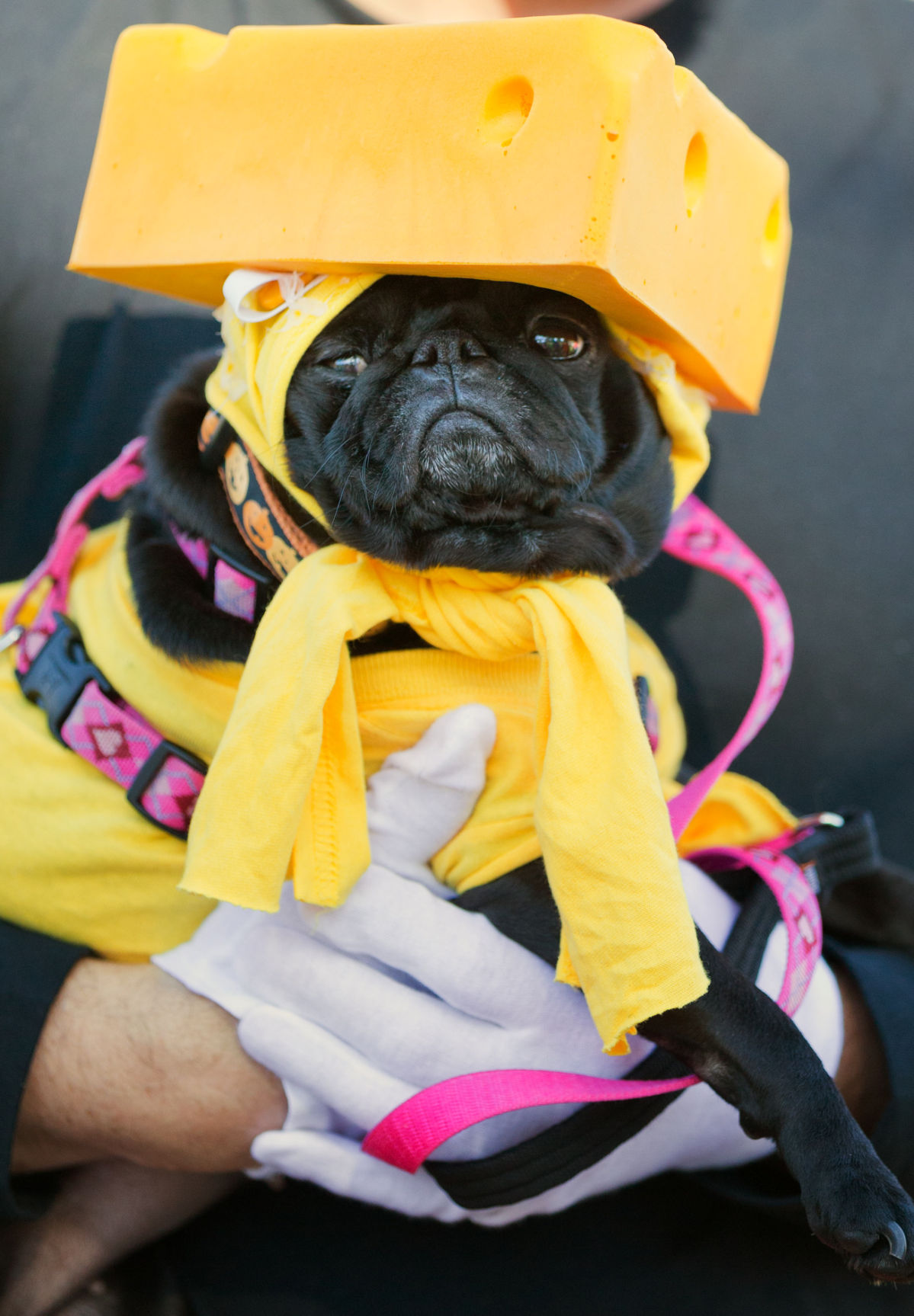 a marilyn monroe golden retriever? 6 awesome halloween costumes for