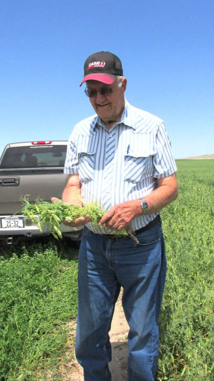 Good start for field pea growers