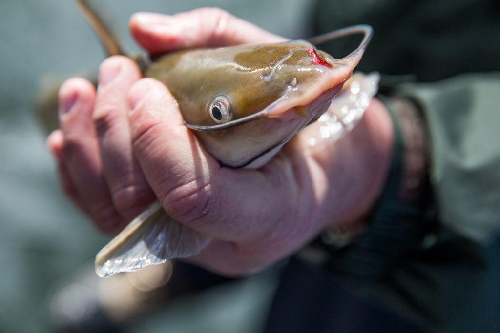 fishing tips for catfish