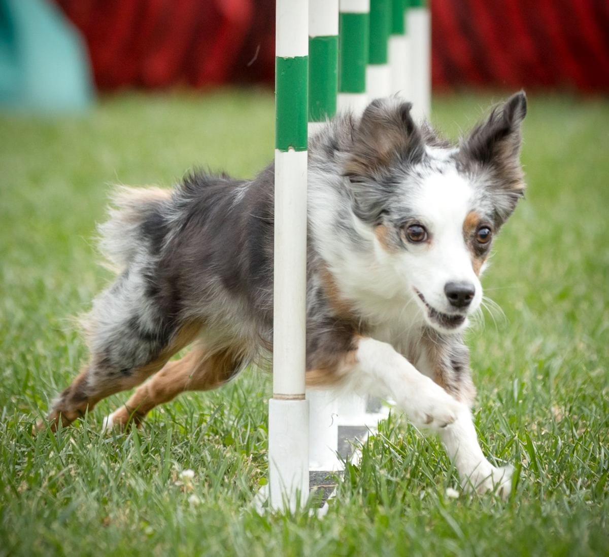 more than 2 000 people and 400 dogs turn out to raise money for